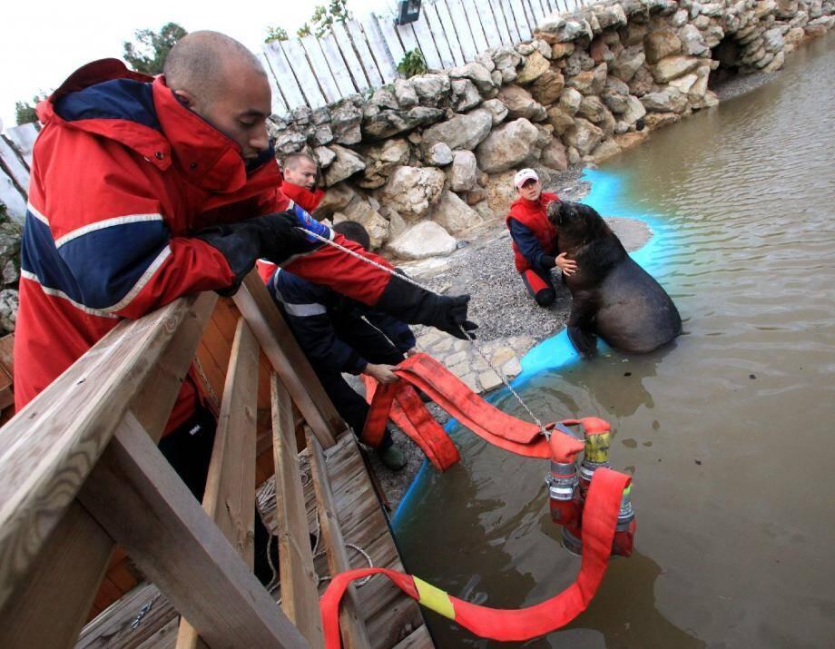 Les marins pompiers de Marseille venus hier en renfort à l'Espace Marineland avec du matériel permettant de pomper toute l'eau sale qui s'était déversée dans les bassins.(Photo Cyril Dodergny)