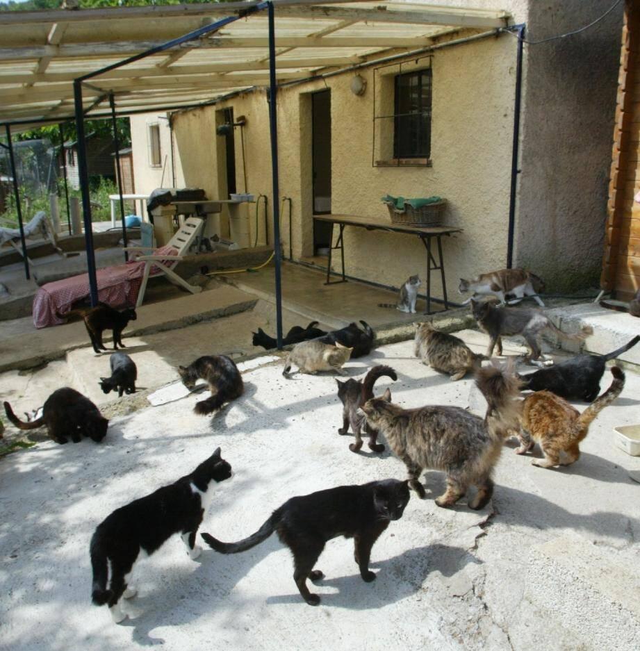 Les « Indignés des Chats de Stella » sortent  - 16226490.jpg