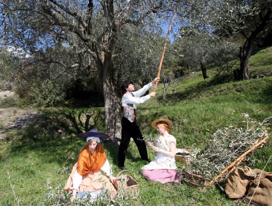 L'olivier, arbre symbole du village, est cultivé depuis des siècles avec un savoir-faire transmis par les anciens.
