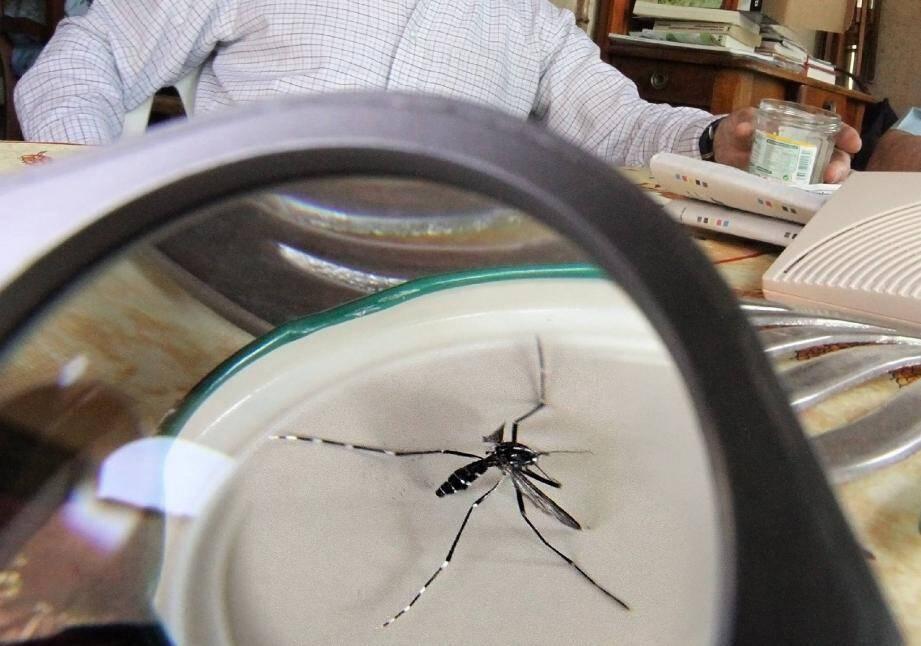 Pour arriver jusqu'à nous, les insectes vecteurs s'invitent dans les avions, cachés dans des bagages.