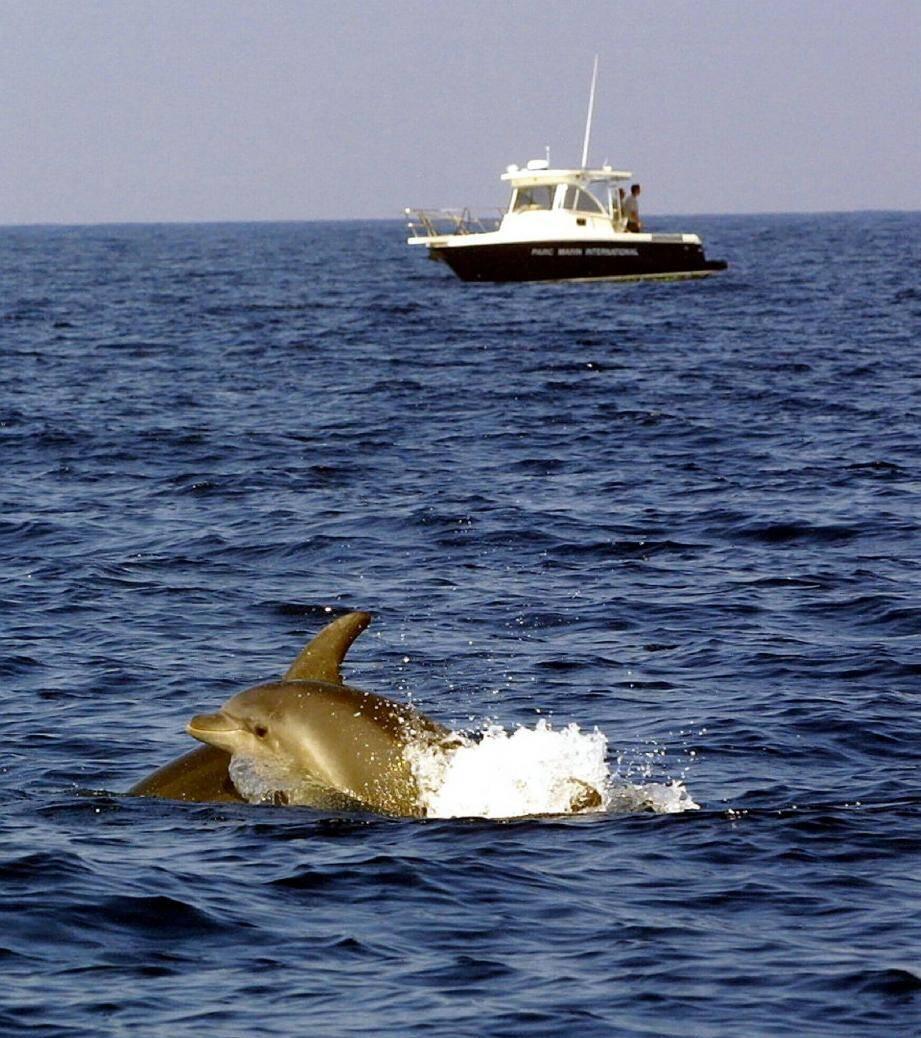 D'après une étude réalisée en 2005 par l'association Souffleurs d'Écume, l'activité « Whale watching » représentait pour la seule Méditerranée française plus de 465 000 euros en dépenses directes.