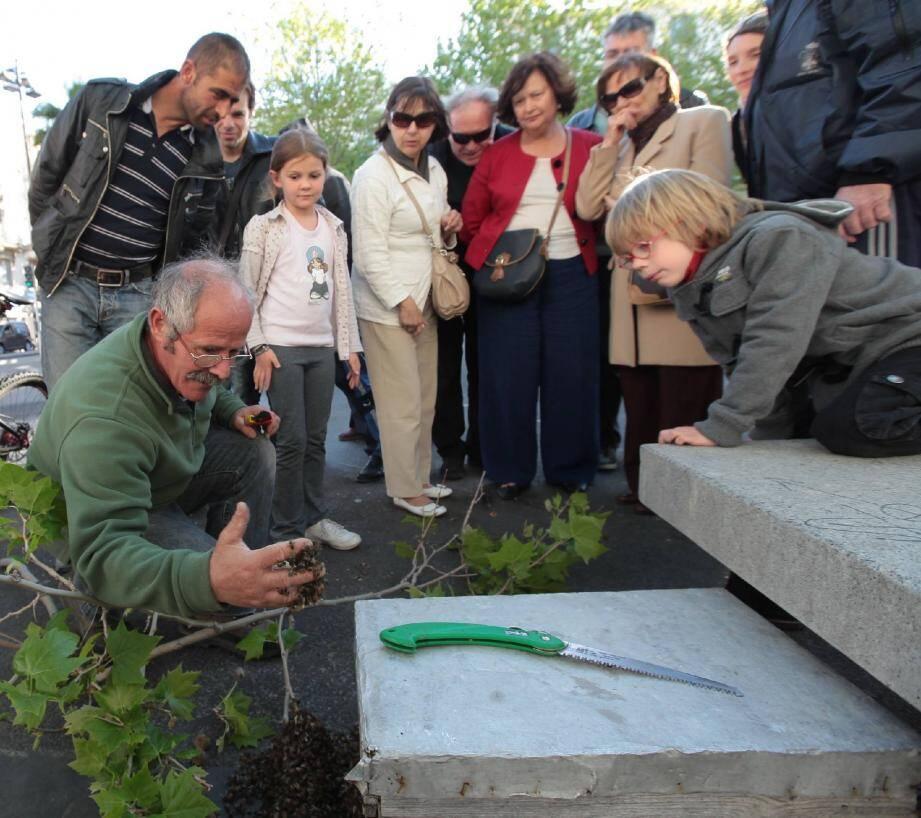 L'apiculteur Gérard Lupo est intervenu très vite hier pour récupérer les milliers d'abeilles qui avaient constitué un essaim dans un arbre.