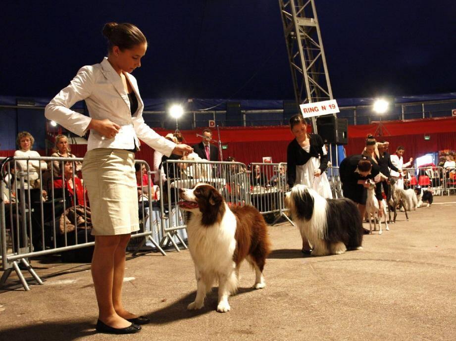 La qualité des chiens présentés et le niveau des éleveurs, sont en revanche, toujours restés au top.