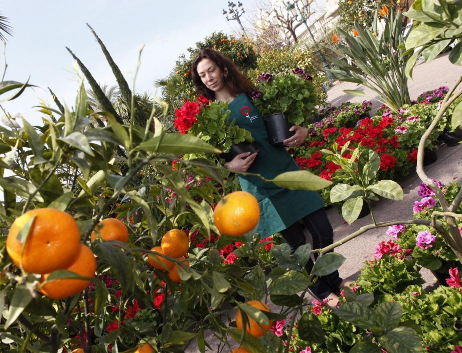 Les jardins s'épanouissent à Monaco - 16805147.jpg