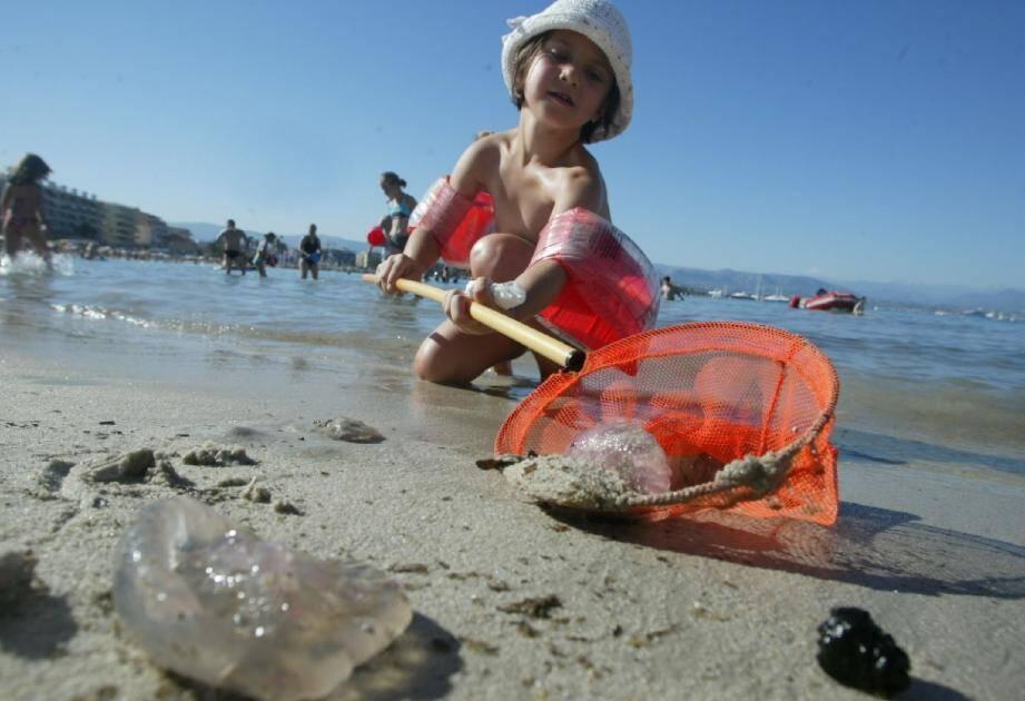 La petite méduse violacée, particulièrement urticante, a déjà piqué les premiers nageurs de la saison.