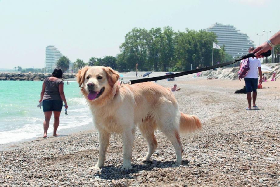 Pilou sur sa plage préférée : celle de l'hippodrome à Cagnes-sur-Mer.