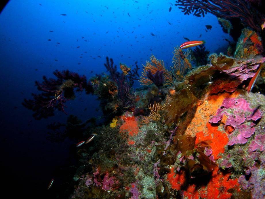 Les organismes marins sont très sensibles aux variations environnementales. Leur existence est menacée si le taux d'acidification provoqué par les gaz à effet de serre continue à croître comme c'est le cas depuis plus d'un siècle.