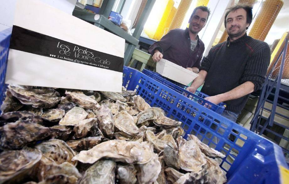 Brice Cachia et Frédéric Rouxeville ont toute leur chance sur le marché de l'huître française avec la Perle de Monte-Carlo qui ne subit à ce jour aucune mortalité.