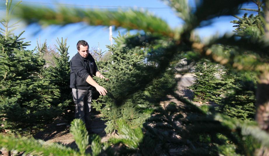 Les prix sont très variables en fonction de la qualité et de l'espèce de l'arbre.