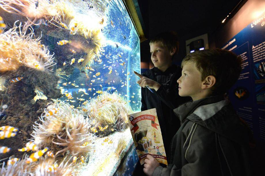 Les yeux et le nez collés à l'aquarium, les enfants tentent de percer les énigmes de la chasse au trésor. Grands et petits sont attentifs aux explications des animatrices.
