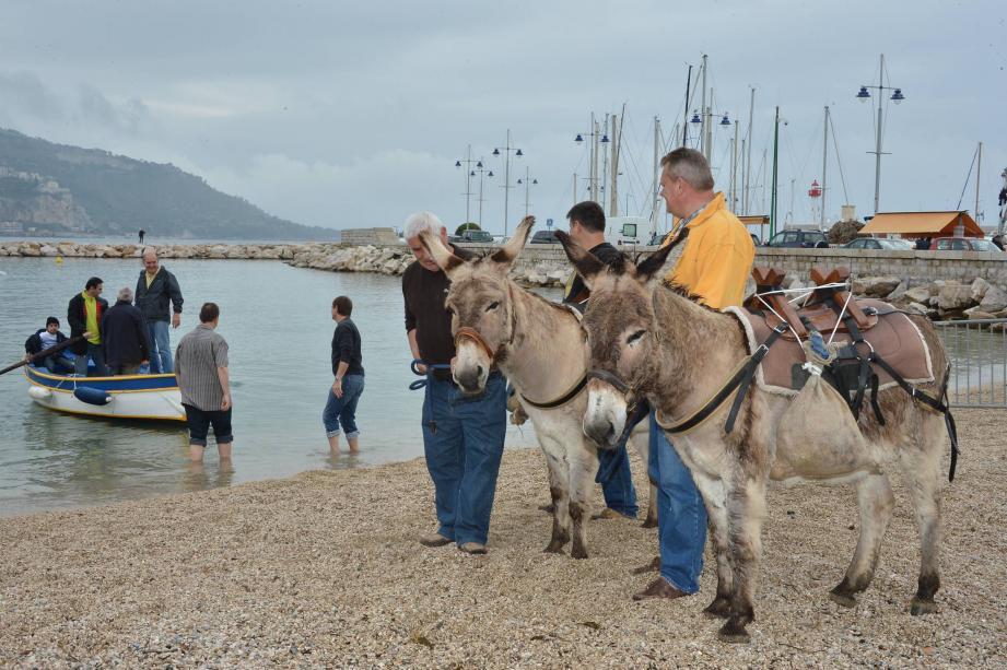 Régate de Menton et ânes édition 2013