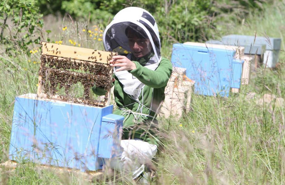 Alexandrine Brion est seule dans les A.-M. à produire les reines dont ses collègues apiculteurs ont besoin pour régénérer leurs ruchers.