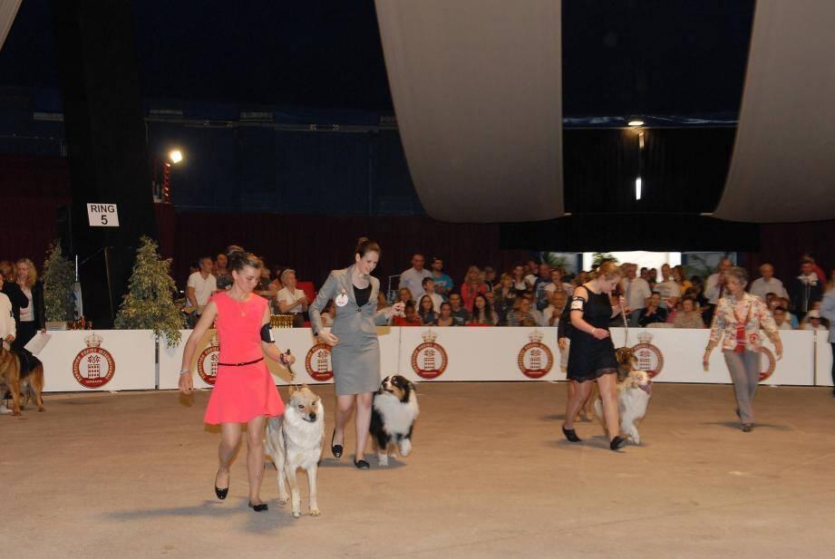 concours chiens monaco