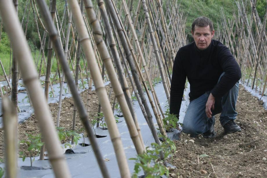 Les plans de tomates de Rémy Lefebvre n'ont pas poussé depuis leur plantation, début mai.