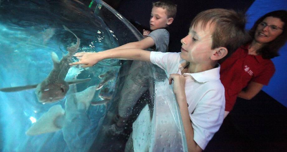Léo adore la grande fresque digitale où nagent de nombreuses espèces de squales.