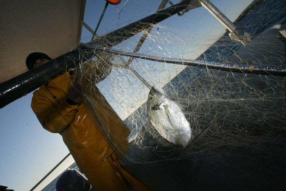 Le pescatourisme, déjà expérimenté à Saint-Raphaël et Six-Fours, a été évoqué comme l'une des propositions emblématiques de la charte. L'idée : des pêcheurs embarquent du public pour faire découvrir leur métier et le milieu.