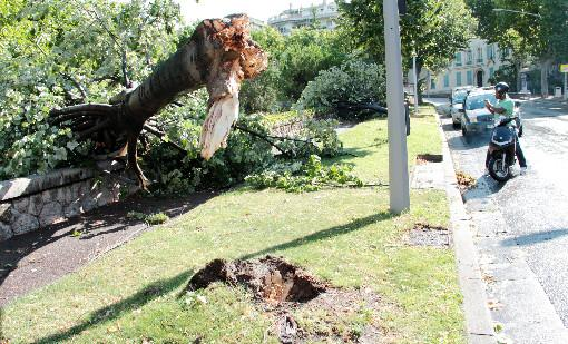Pas de blessés graves mais plusieurs arbres arrachés, comme sur le boulevard de Cimiez à Nice.