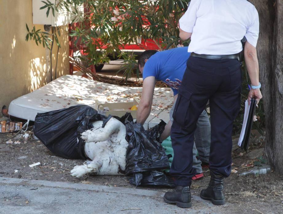 Le sac, dont dépassait deux grosses pattes blanches, a été découvert par les éboueurs.