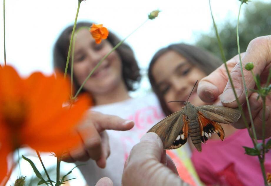 Cleane et Elya ont vu le « joli » papillon sur le massif de cosmos dans le jardin de leur grand-père.