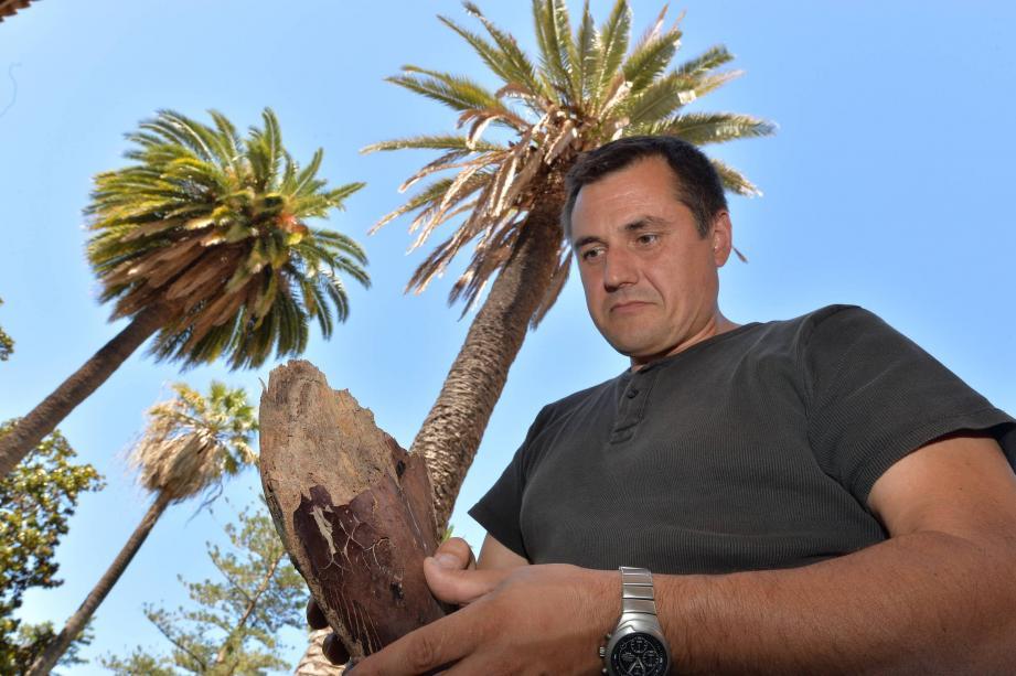 300 palmiers sur la commune sont concernés, Franck Roturier, le directeur des parcs et jardins les surveille de près.