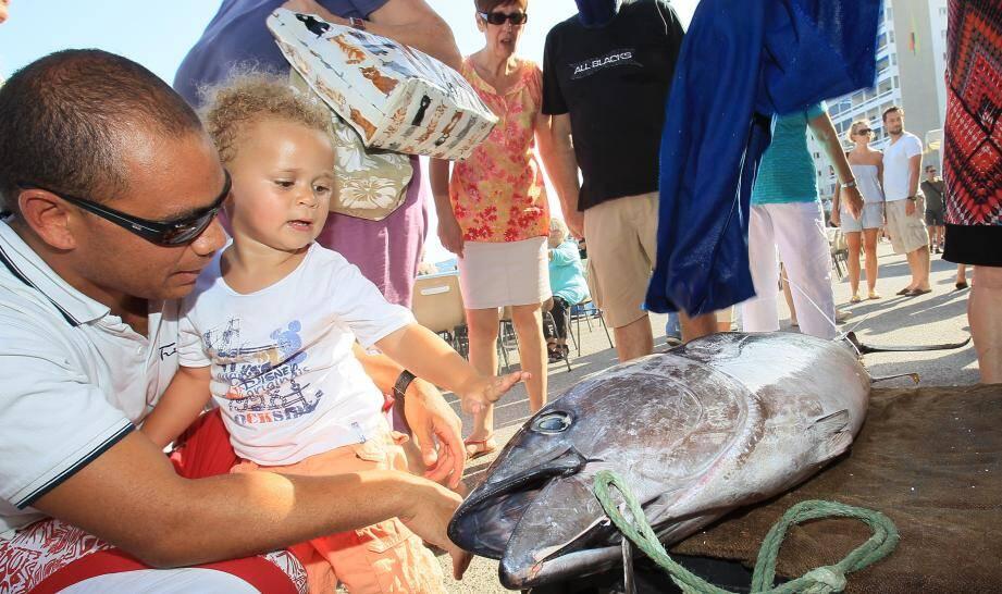 Rencontre inédite avec un thon pour ce petit garçon, hier au port Saint-Louis du Mourillon.