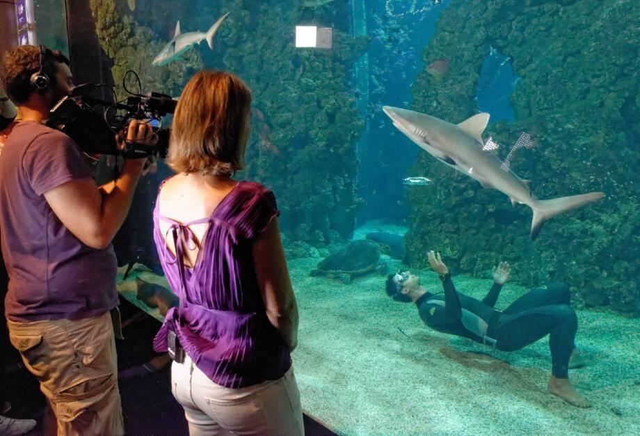 L'équipe de tournage a réussi à capter la magie d'une plongée en apnée au milieu des requins. Il fallait bien toute l'expérience de Pierre Frolla pour leur offrir ce moment de grâce.