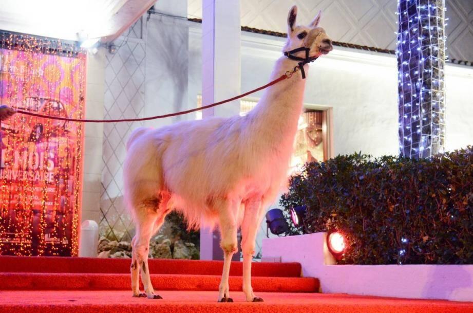 serge le lama en tournage de clip dans une boite de nuit de cannes 131123