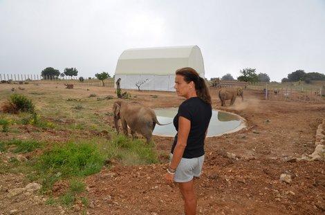 Sur les hauteurs de Monaco, la princesse Stéphanie veille désormais sur les éléphantes Baby et Népal