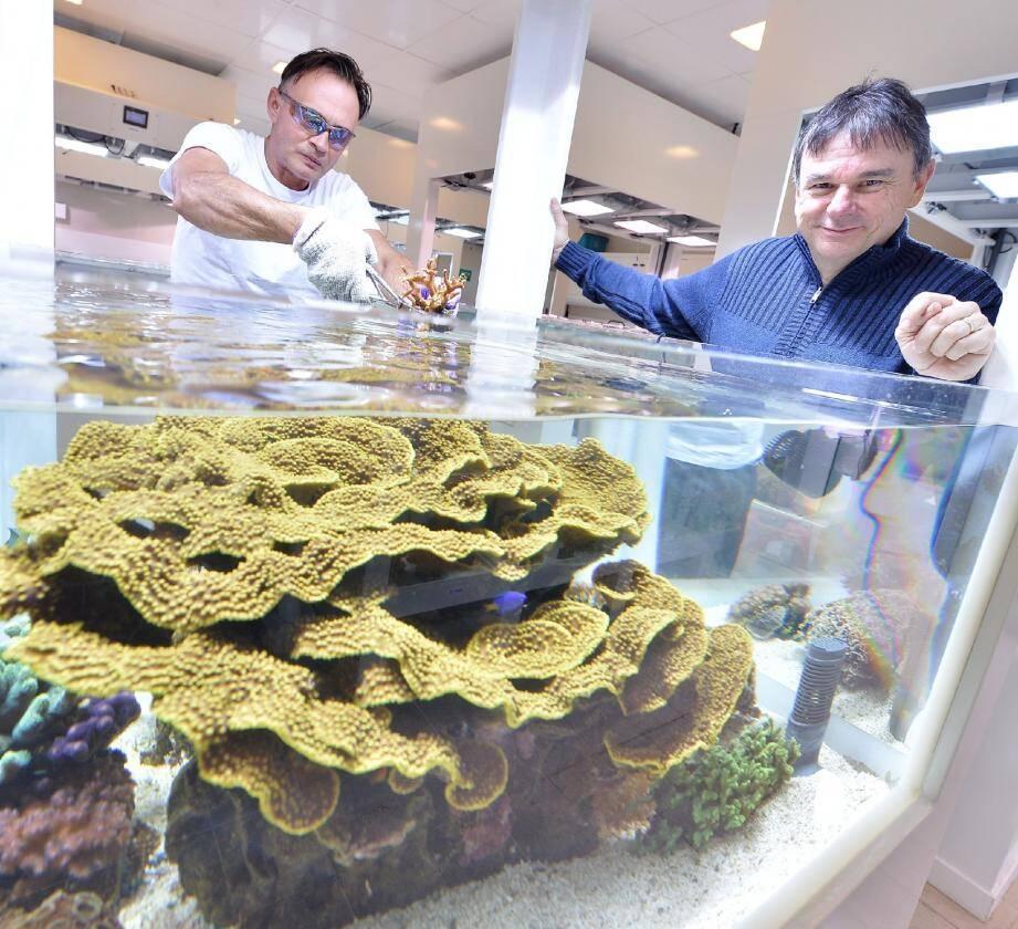 À droite, Denis Allemand observe les tout nouveaux aquariums du Centre scientifique de Monaco.