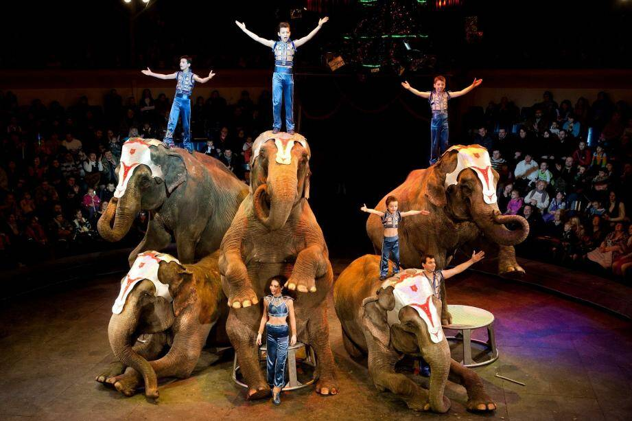 À l'instar de la famille Gartner et son époustouflant numéro de dressage d'éléphants (ci-dessus) , les séquences riches en émotions se succéderont pour offrir au public un kaléidoscope qui ravira toute la famille...(D.R.)