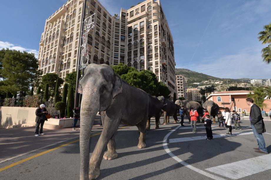 Les éléphants sont arrivés dans la nuit de vendredi à samedi au chapiteau de Fontvieille.
