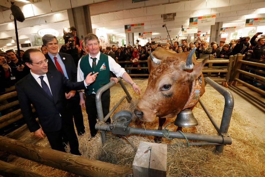 François Hollande lors de sa visite au Salon de l'agriculture avec la mascotte de l'édition 2014, une vache tarentaise nommée Bella.