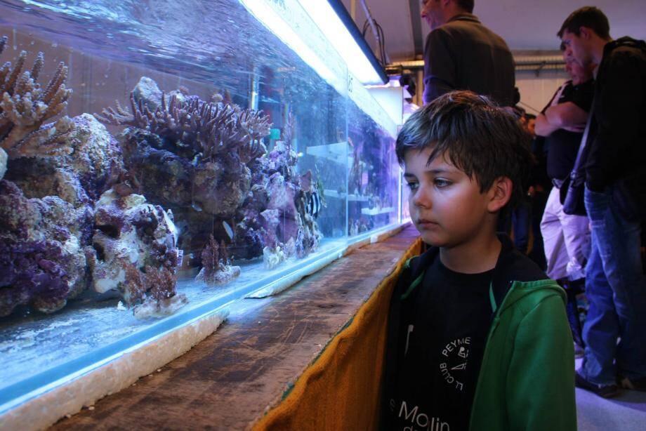Jusqu'à dimanche soir, le 12e salon azuréen d'aquariophilie et de terrariophilie ouvre ses portes à Antibes, aux Espaces du Fort-Carré.