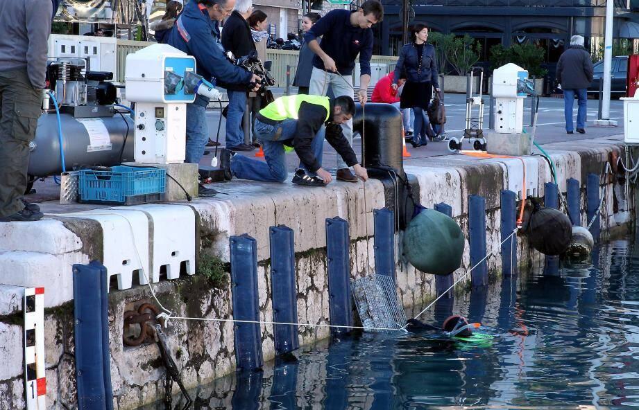 Des cages contenant des coquilles sont installées sous l'eau afin de servir de nurserie aux poissons.