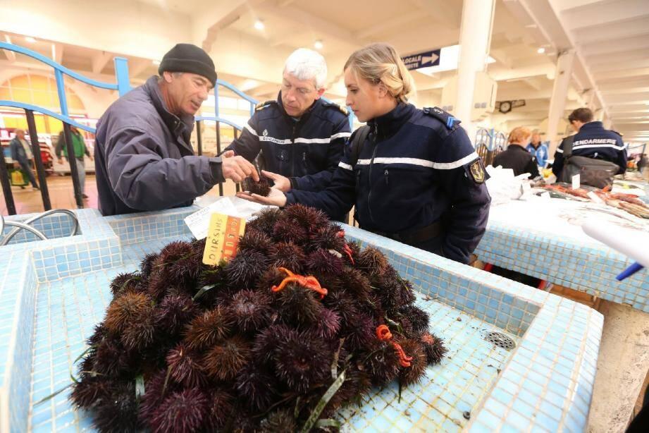 Les gendarmes en pleine vérification de la taille des oursins proposés à la vente.