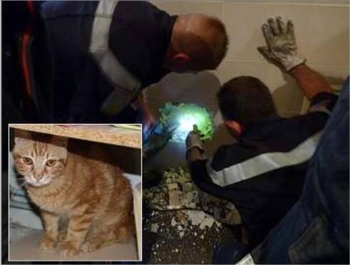 Durant de longues minutes, les pompiers se sont mobilisés pour extraire Caramel de son sarcophage de béton. Hier, le chaton encore traumatisé par son aventure, peinait à retrouver ses habitudes.