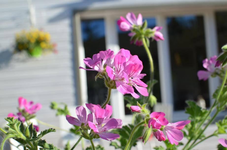 Insecticides naturels ? Pensez aux plantes - 25654225.jpg