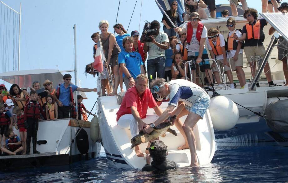 Une tortue marine relâchée au large de Monaco - 25709404.jpg