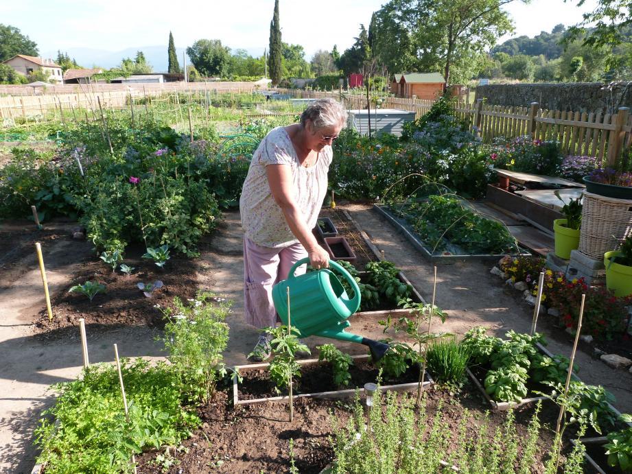Janine aux petits soins pour son carré d'aromates.