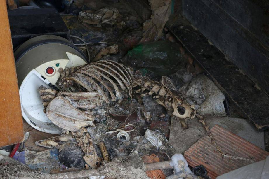 Le squelette du chien a été retrouvé encore attaché dans le caserone au fond du jardin.(Ph. Jeannot Filippi)