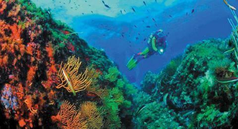 Festival international du film maritime, d'exploration et d'environnement de Toulon.