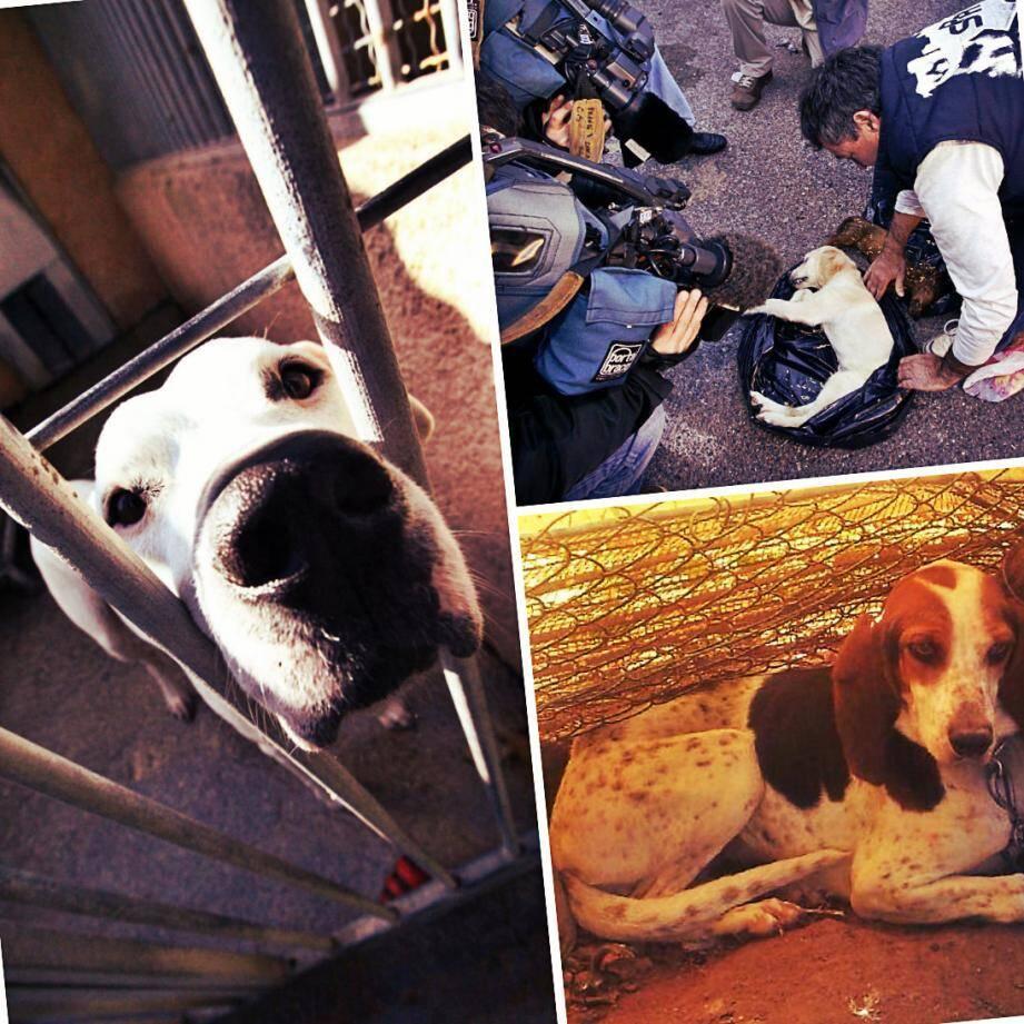 Au refuge de Carros, des chiens sont en attente d'une adoption. Ils méritent une deuxième chance...