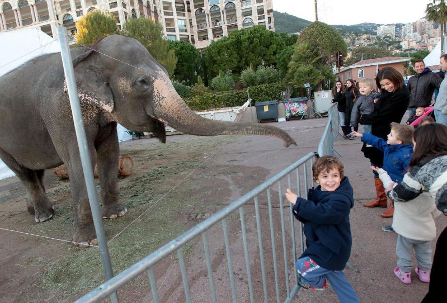 Dans l'enclos des trois éléphants d'Asie, c'est Jumba la plus curieuse, pour le plus grand plaisir des enfants.