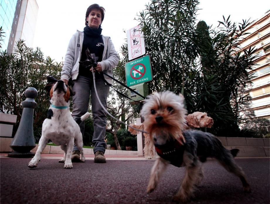 Les espaces verts, les pelouses et les plages sont interdits aux chiens en Principauté.