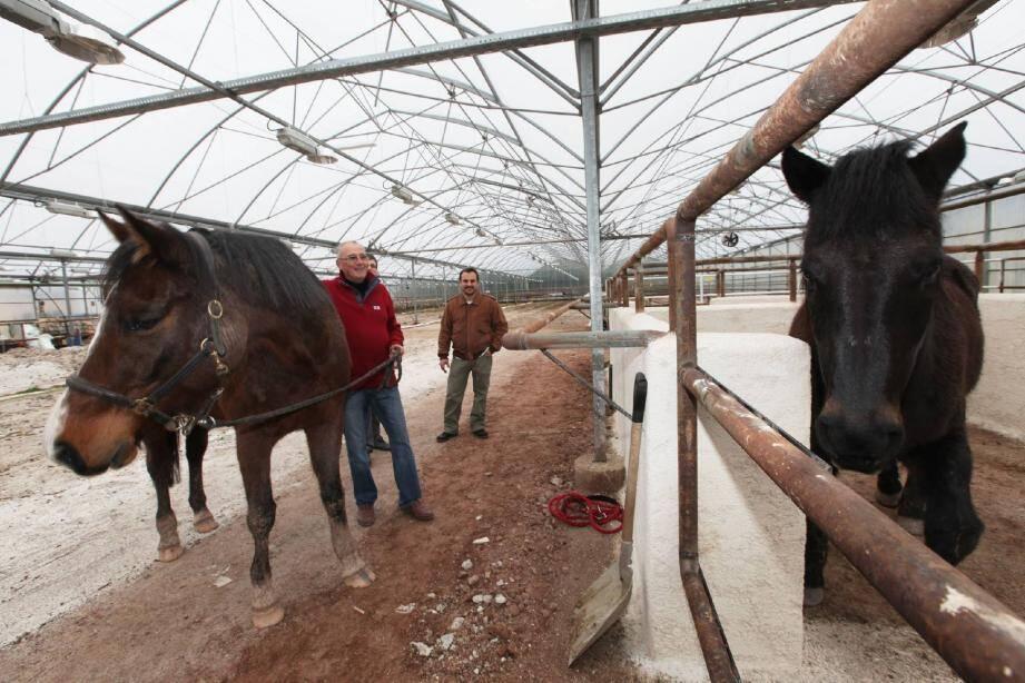 Marc Giovinazzo, ici avec Christian Arnaud et son cheval Lubéron, n'est pas homme à se laisser abattre. Si l'horticulture ne fait plus recette, il se bat pour que son exploitation perdure. En transformant, par exemple, cette vaste serre en… balnéo pour chevaux.