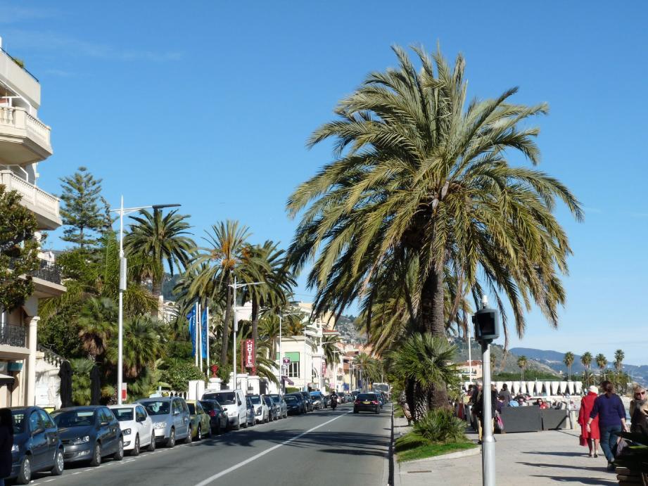 Sur les 1 200 palmiers recensés dans la ville, 200 sont attaqués par le charançon rouge. Une centaine appartiennent à la Ville, une autre centaine à des particuliers. Les deux doivent agir de front.