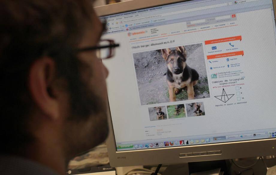 Sur Internet, rien de plus simple que d'acheter un animal de compagnie. Mais attention, l'arnaque est peut-être au bout du clic.
