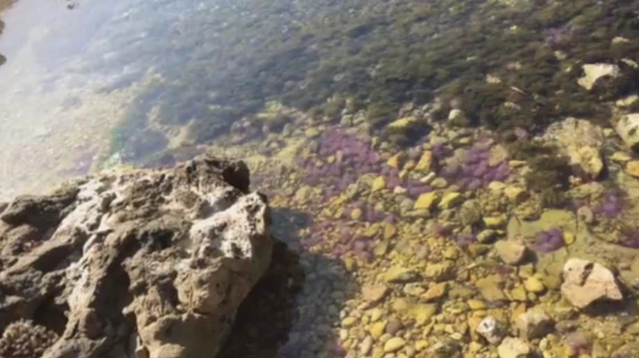 Les méduses urticantes sont de retour à Antibes