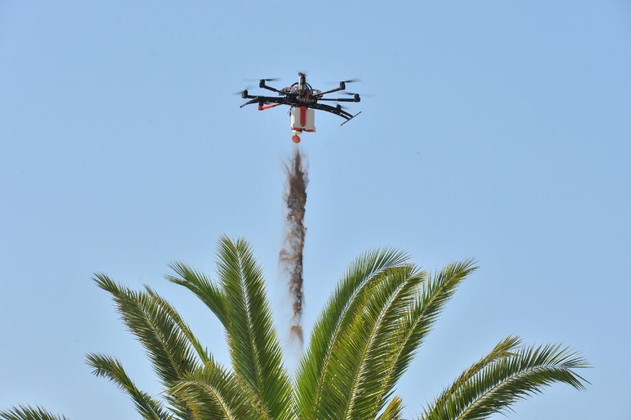 Vol au-dessus d'un nid de charançons rouges - 29310540.jpg