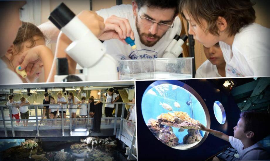 Se retrouver dans les coulisses du musée océanographiques, là où personne n'est autorisé, c'est aussi ça le Snapper Club. Comme ici, au-dessus du lagon, avec le nourrissage des requins obtient beaucoup de succès.